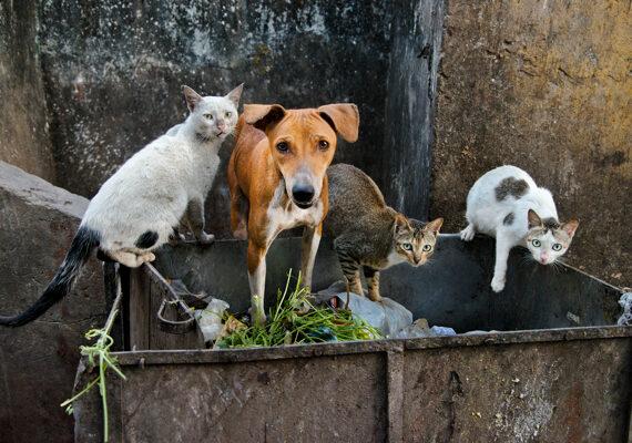 GLI ANIMALI RACCONTATI DA STEVE McCURRY