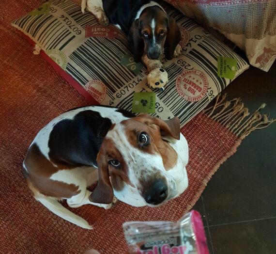 DOG JELLY: UN RIMEDIO SICURO AD OGNI FONTE DI STRESS